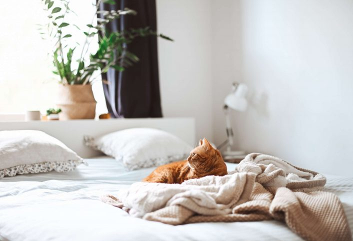 How to Tell if You Have Bed Bugs or Fleas